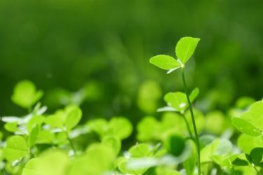 ☆家づくりの流れ・・・現場から思う ・・・環境に優しい素材【素晴らしい自然素材】