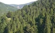 ☆檜の素晴らしさ、木の文化を継承する!