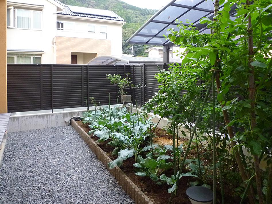 野菜や樹木を植えた菜園