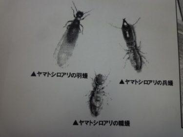 羽蟻の群飛、4月中旬から要注意‼対策の前に白蟻の知識を知る。①