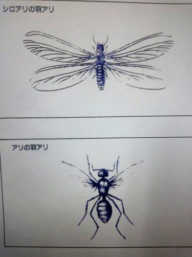 シロアリの知識を学ぶ。‥‥日本に生殖する怖いシロアリの実態‼ ③