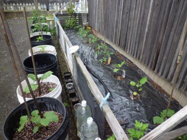 ☆今年は、種類より数を増やしてグレードアップ「家庭菜園」❔